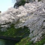 お花見(千鳥ヶ淵、上野)