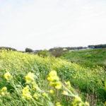 自転車(LOUIS GERNEARU CASPER) 春の強風 新川 春の風物詩 鮒の乗っ込み