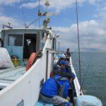 GWに船橋港からの舟釣り東京湾木更津沖のでキス釣り 釣果25匹!美味しくお刺身でいただきました!