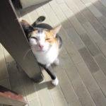 サムイ島 朝食と猫(Anantara Lawana Resort & Spa)  1日目 朝 (1st day at Koh Samui)  2011/9/10