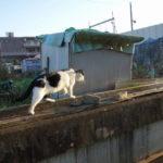 自転車(LOUIS GERNEAU CASPPE)新川~印旛沼サイクリングコースで佐倉ふるさと広場の風車を見て帰ったら猫と出会いしばし戯れる