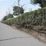 震災の跡が痛々しい 自転車日記 花見川サイクリングコース 33K (震災明け初乗り)