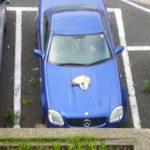 ネコ~ on the car