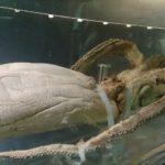 ダイオウイカ見たさに国立科学博物館 特別展 深海 フィッシュバーガーものり弁も深海魚だった!