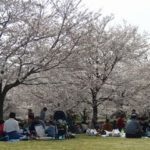 お花見(千葉市青葉の森公園)