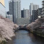 桜の名所第1位の目黒川でお花見 おすすめ撮影スポットとお花見弁当