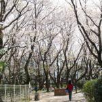 北習志野近隣公園 お花見