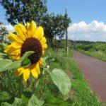 自転車日記 真夏の花見川サイクリングコース 幕張~やちよ道の駅 LOUIS GARNEAU CASPER