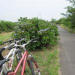 自転車日記 印旛沼サイクリングコース 八千代~佐倉