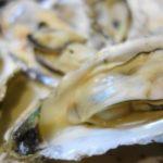 広島(宮島産)牡蠣が来ました~ 殻付き牡蠣をレンジで調理
