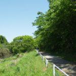 新緑の中のサイクリング(花見川サイクリングコース)