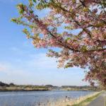 河津桜と菜の花 自転車(LOIS GARNEAU CASPER)春の畔道~新川サイクリングロード